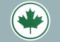 zielony-lisc-klonowy-nak_312